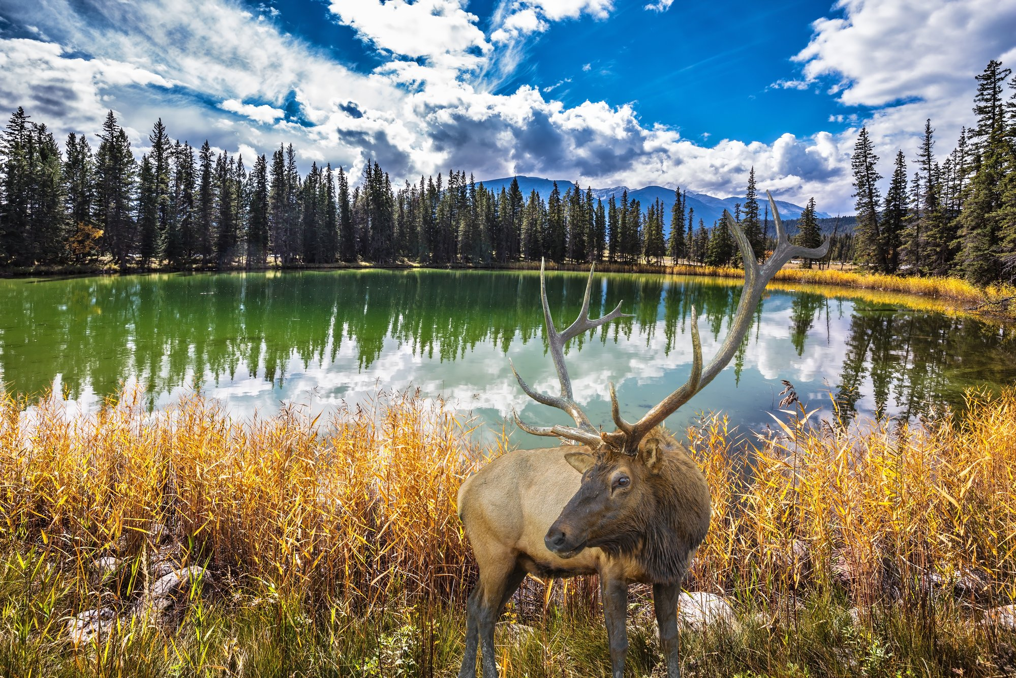 7ed94f683d9e 17 Stunning Attractions & Things to Do in Jasper National Park
